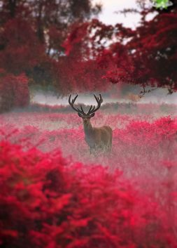 Deer in Autumn Mist