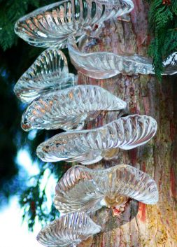 Glass Tree Fungi by Stephen Beardsell